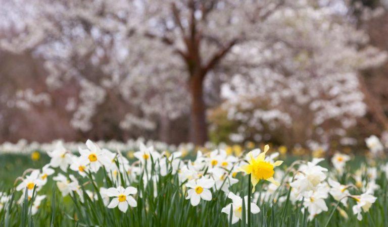 Vacanța de primăvară: 15 locuri din România pentru un concediu minunat
