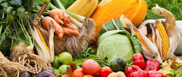 Agricultura Ecologică Şi Paradigmele Acesteia. Dezvăluiri și soluții pentru viitor