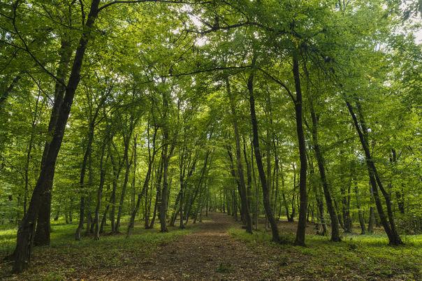 Pădurea Hoia Baciu, cea mai înfricoşătoare din lume, a intrat în vizorul presei internaţionale după ce a fost vizitată de jurnaliştii britanici