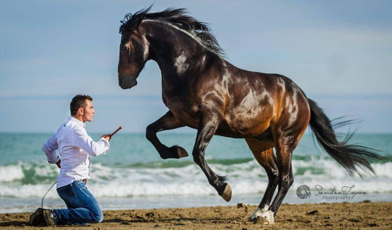 Cel mai talentat îmblânzitor de cai din lume e un român din Sighetu Marmației (VIDEO)