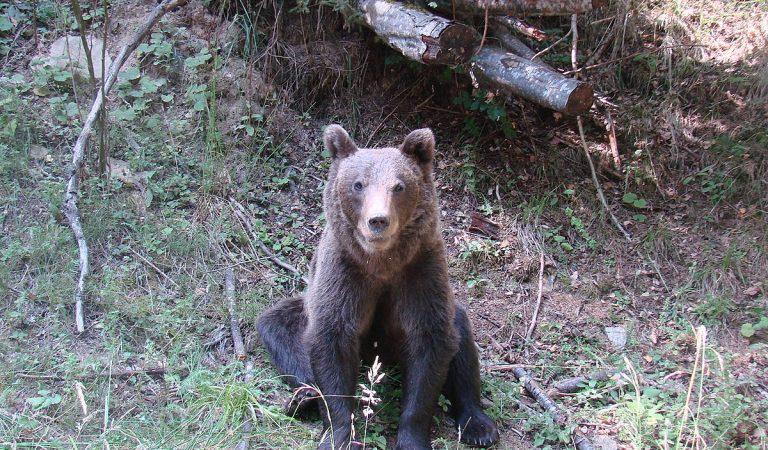 Cea mai mare rezervație de urși bruni din lume