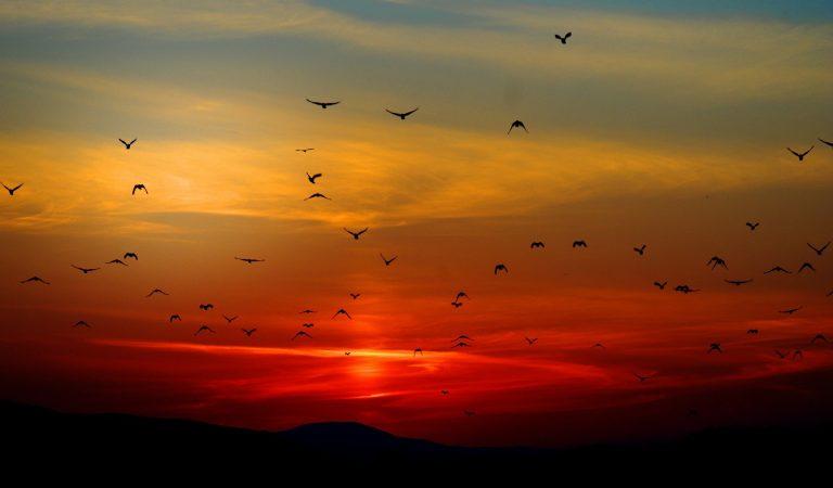 Ce mituri aduc păsările din România?